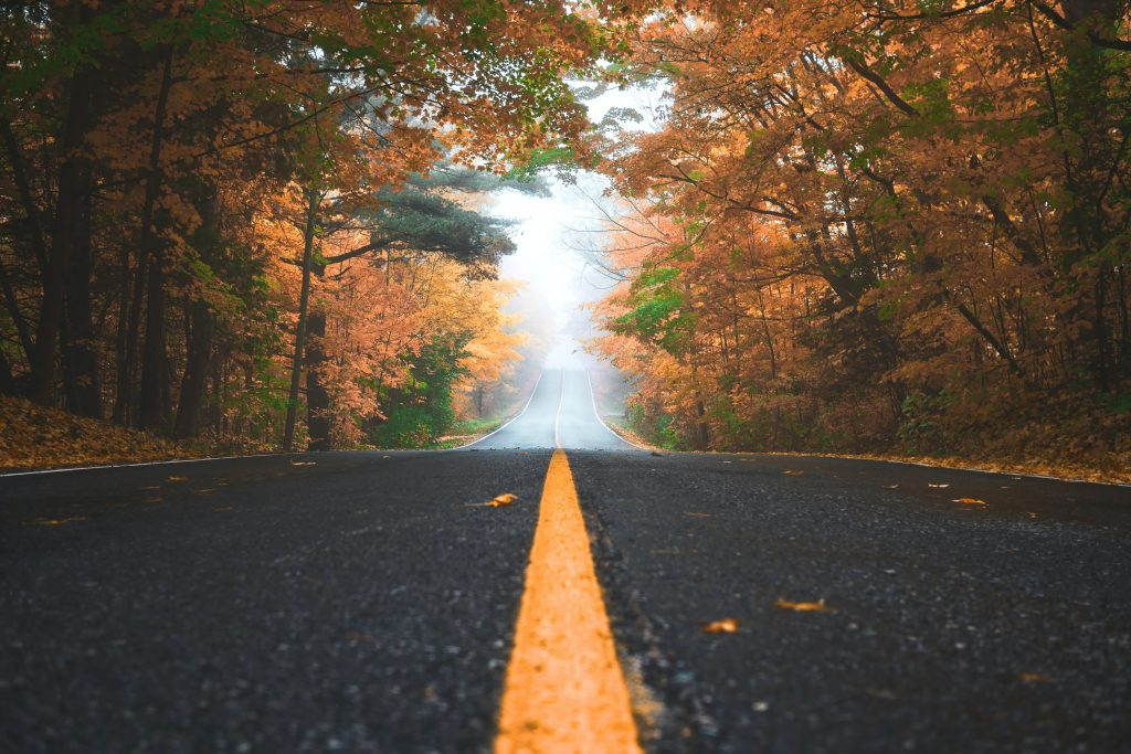 Road surrounded by fall trees.
